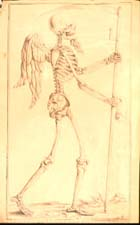Image from Miscellaneous skeletal drawings
