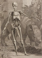 Black and white illustration from 'Tables of the skeleton and muscles of the human body', published by Bernhard Siegfried Albinus in 1749. (Sp Coll Hunterian Az.1.6, Table 4) Links to web exhibition.