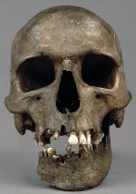 human skull with mandible, Clachaig