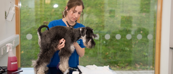 Veterinary Medicine student carrying a dog