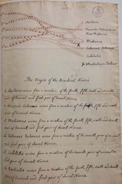 William Hunter's notes on Brachial Plexus, Special Collections