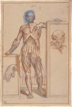 Drawing of the brachial and lumbar plexus - by Pietro da Cortona, Rome (1615-1620) (MS Hunter 653 tab 3