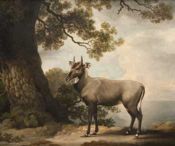 The Nilgai, oil painting by George Stubbs, 1769, of an Indian antelope newly introduced to Europe