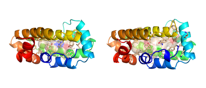 Na–FAR-1nematode fatty acid binding protein