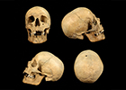Image of four skulls seen from the front, back and each side