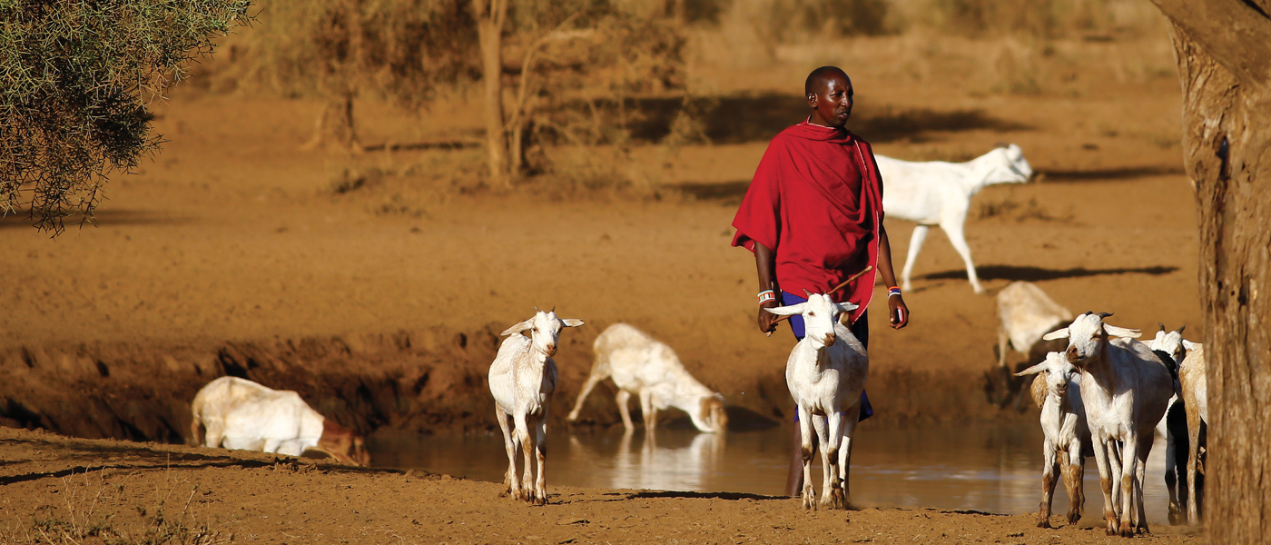 Farmers with their livestock in Africa