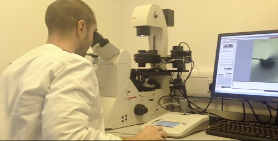 Image of a male scientist working at a microscope carryout microinjection on mosquito eggs