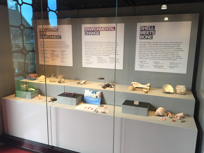 Shell meets Bone at the Hunterian Museum