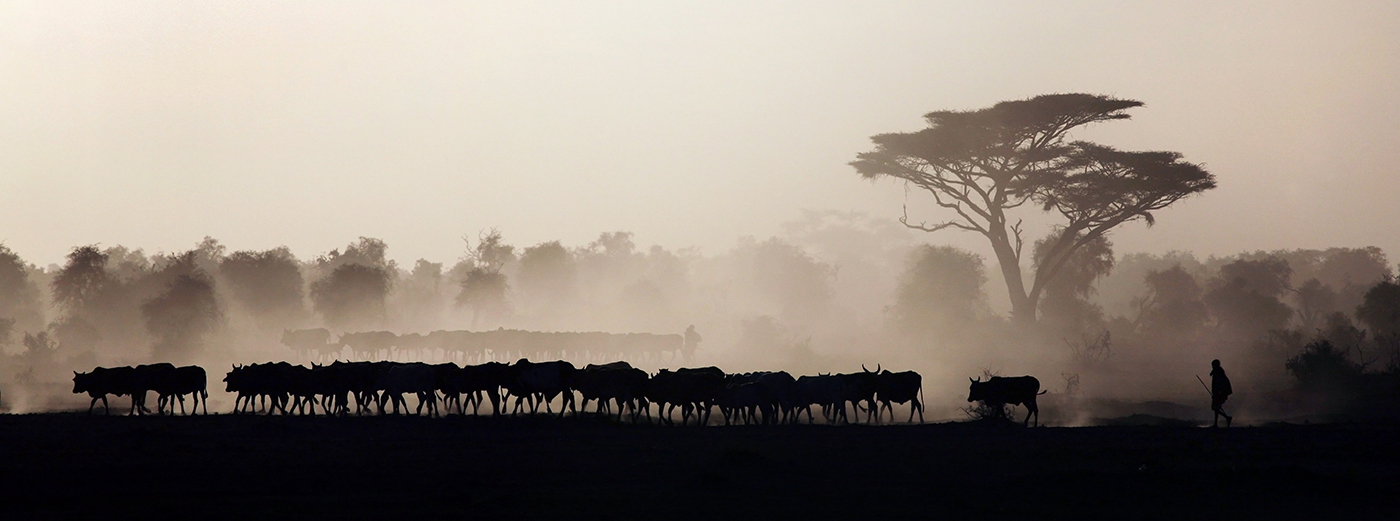 Farmer and cattle in African landscape