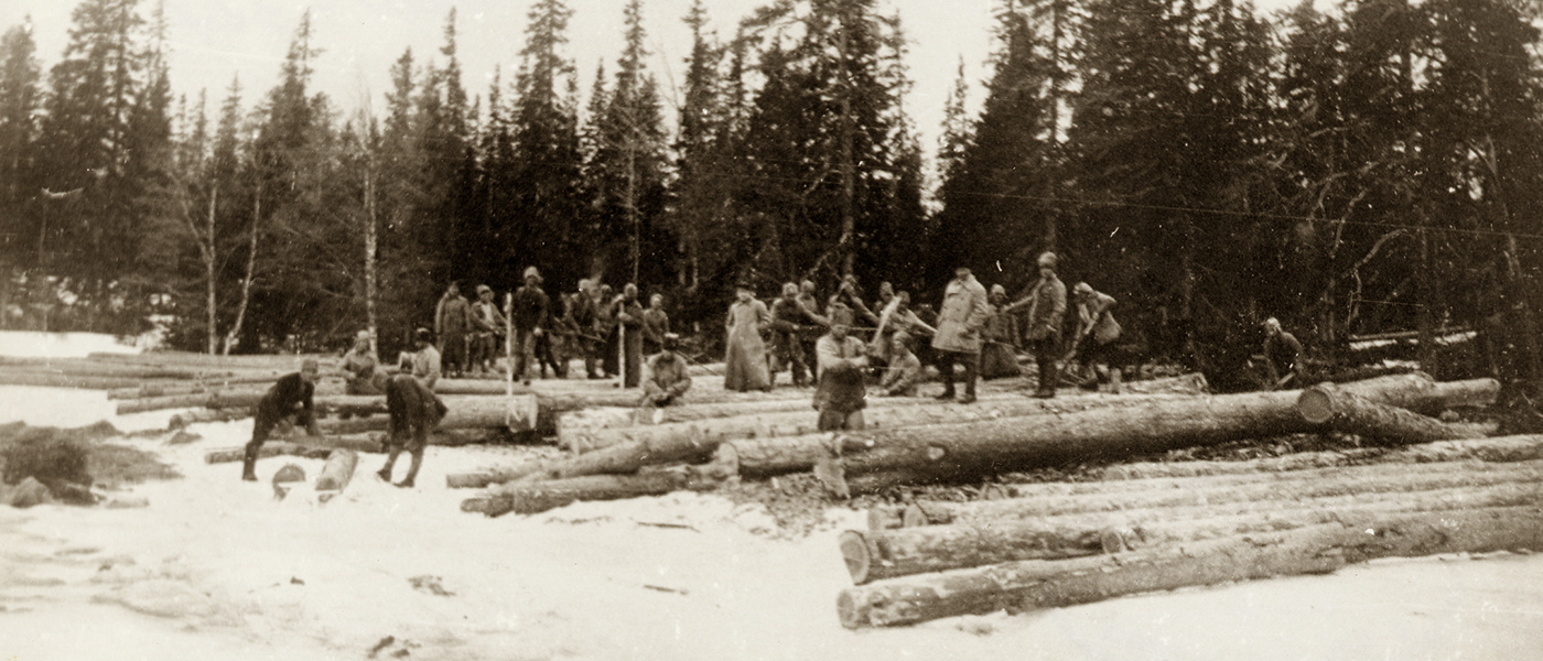 Photograph of tree felling
