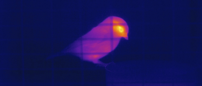 Thermal image of a bird