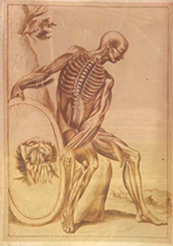 an anatomical drawing by Pietro da Cortona, 1618. the image is of a seated male, with anatomical detail of bone muscle and nerves.  The figure holds a mirror to his side and the image in the mirror depicts a head tilted backwards, revealing anatomoical detail of the neck and jaw.