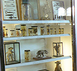 Glass Display case at The Hunterian containing anatomical samples