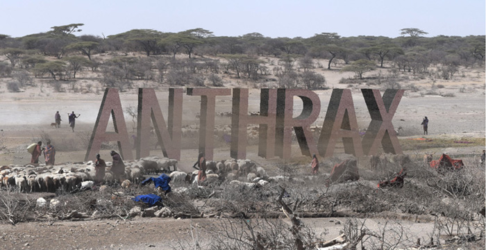 Picture of Tanzania Landscape with Anthrax graphic