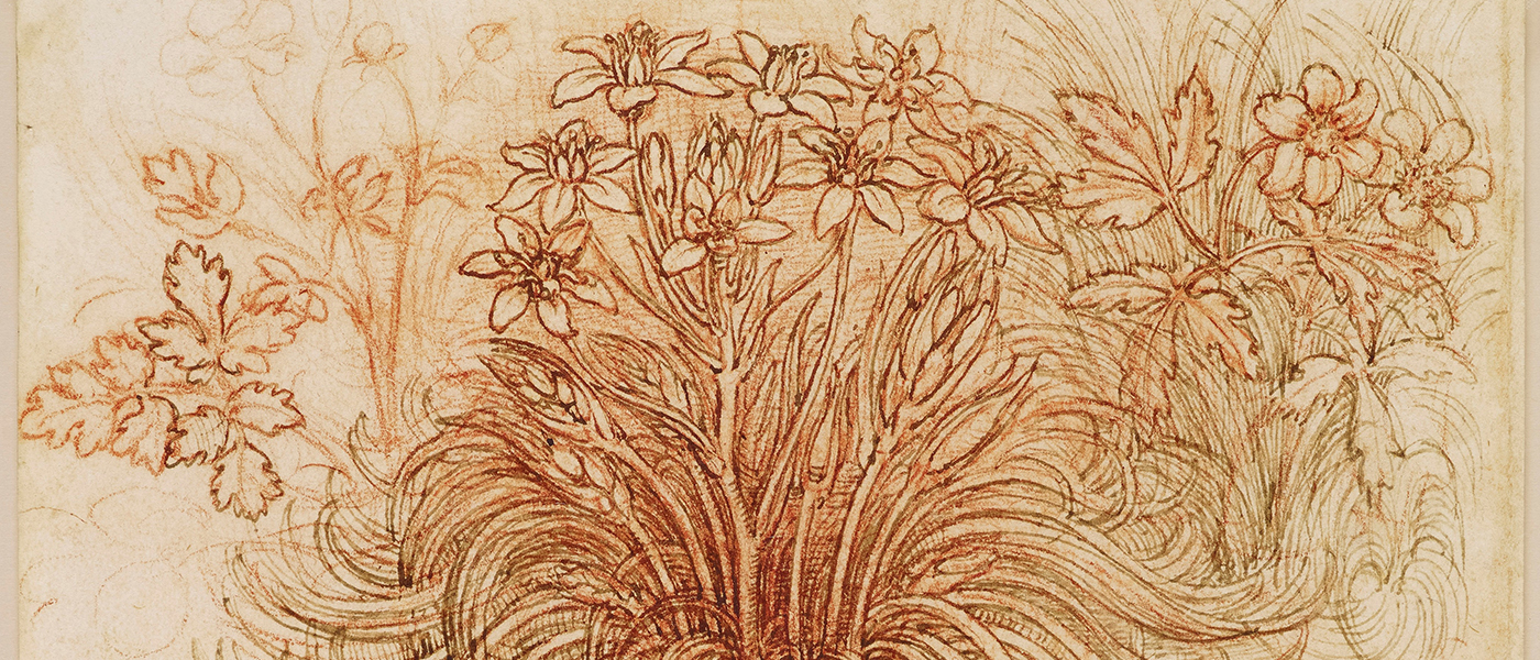 Leonardo da Vinci, A star-of-Bethlehem and other plants, c.1506-12. Royal Collection Trust / © Her Majesty Queen Elizabeth II 2018.