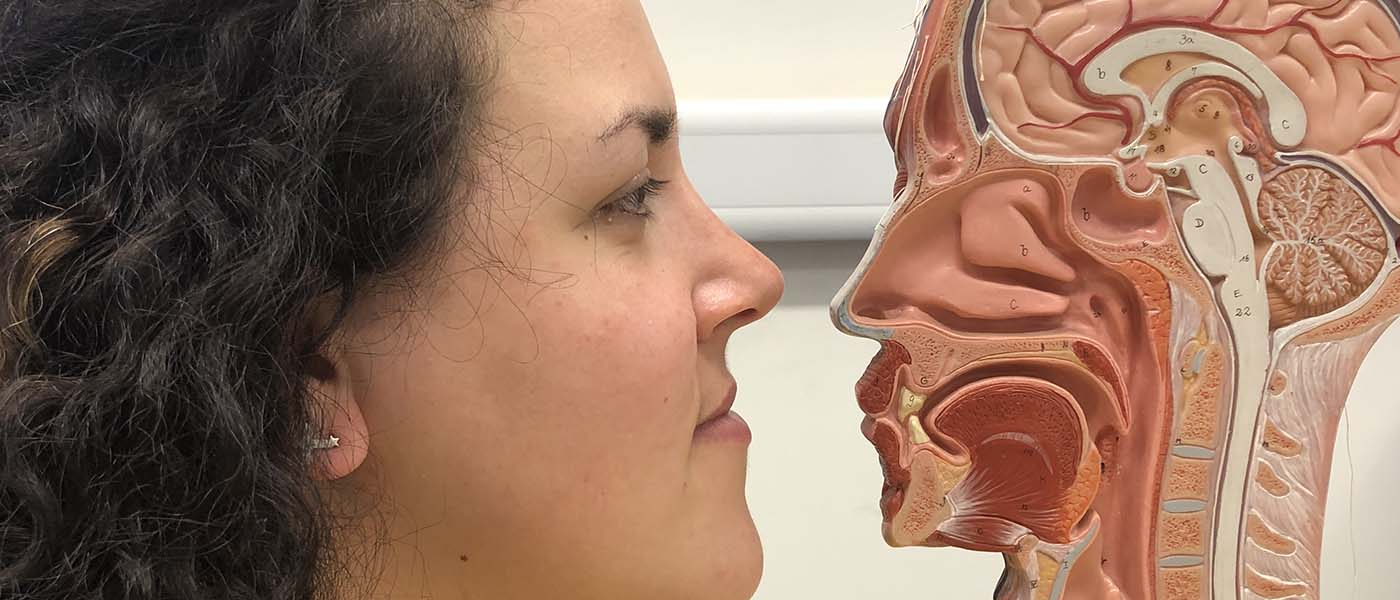 Close up of student looking at a cross-section model of the human head