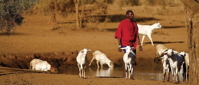 Farmer with his livestock on Africans plains