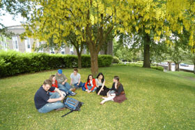 Students outside sitting beneath trees