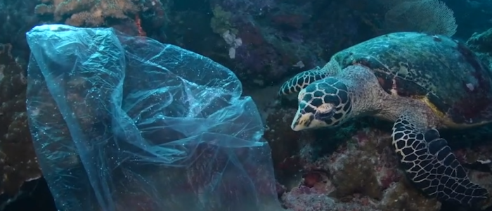 A turtle and a plastic bag
