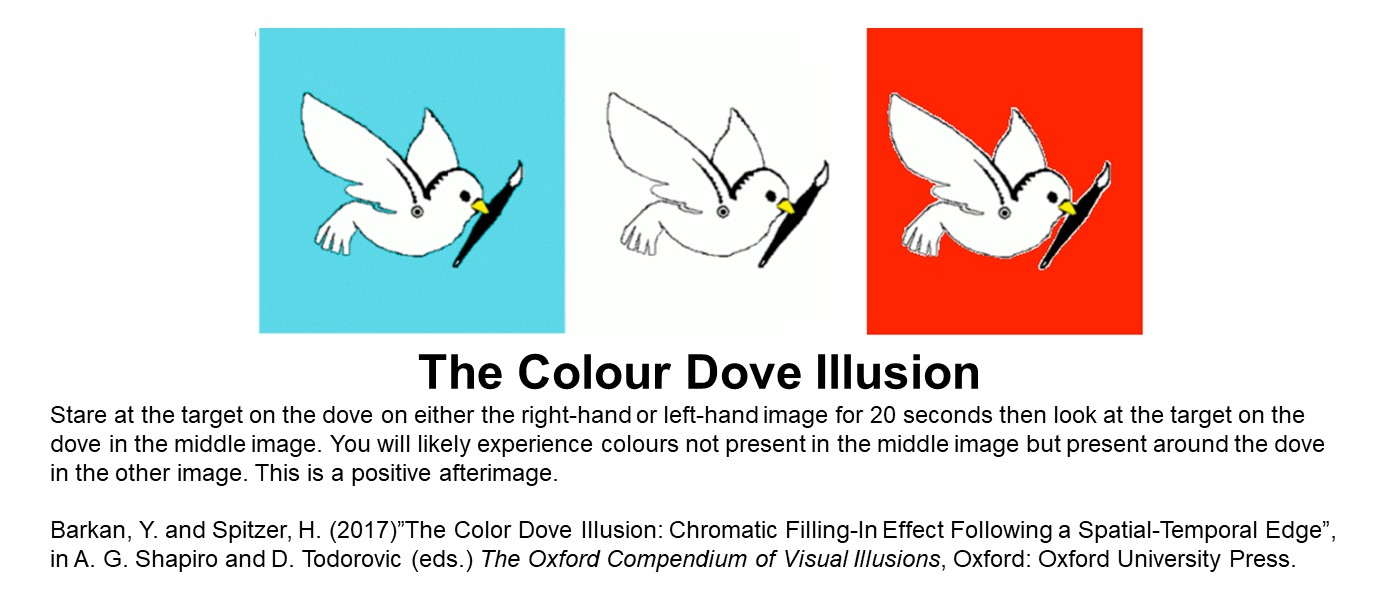 three boxes with a drawing of a white dove helding a black paintbrush, on red, white and blue background respectively. Text reads: Stare at the target on the dove on either the right-hand or left-hand image for 20 seconds then look at the target on the dove in the middle image. You will likely experience colours not present in the middle image but present around the dove in the other image