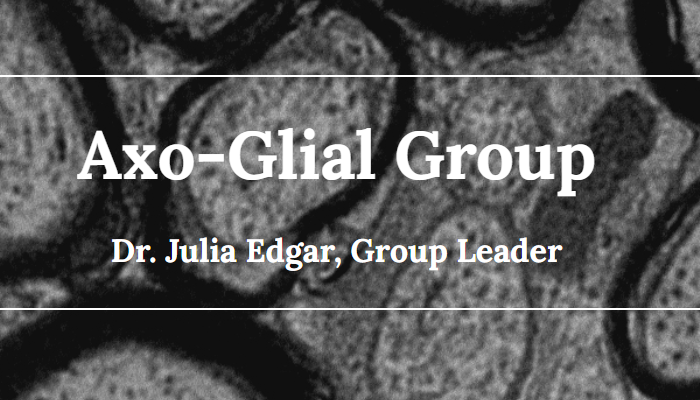 Homepage image from the Axo-Glial Research Group website